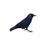 SD GOTH SOUL CROW 2.png