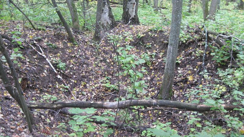 Фоторепортаж из леса