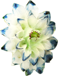 ldavi-heartwindow-porcelainflower9.png