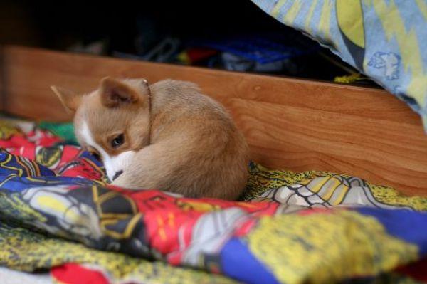 Забавные животные...:) http://img-fotki.yandex.ru/get/4520/130422193.31/0_684d0_b5603730_orig