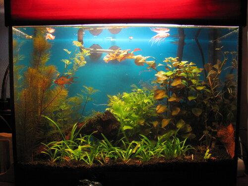 35-литровый аквариум по состоянию на 2 октября 2011 года