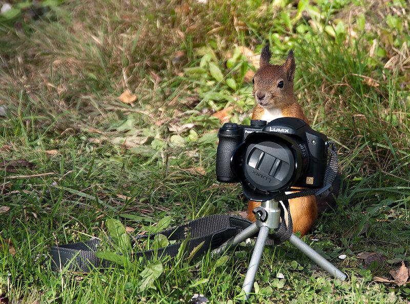 Фотограф, открой объектив!