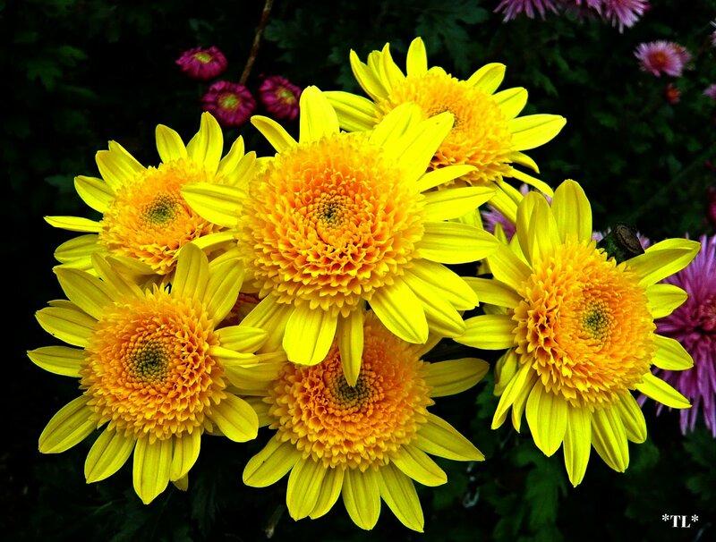Из цветов прекрасных и осеннихНарисую солнечный букет...Пусть звучит в палитре настроенийПраздничный изысканный сонет...