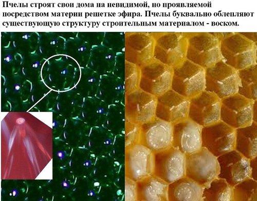 соты пчел