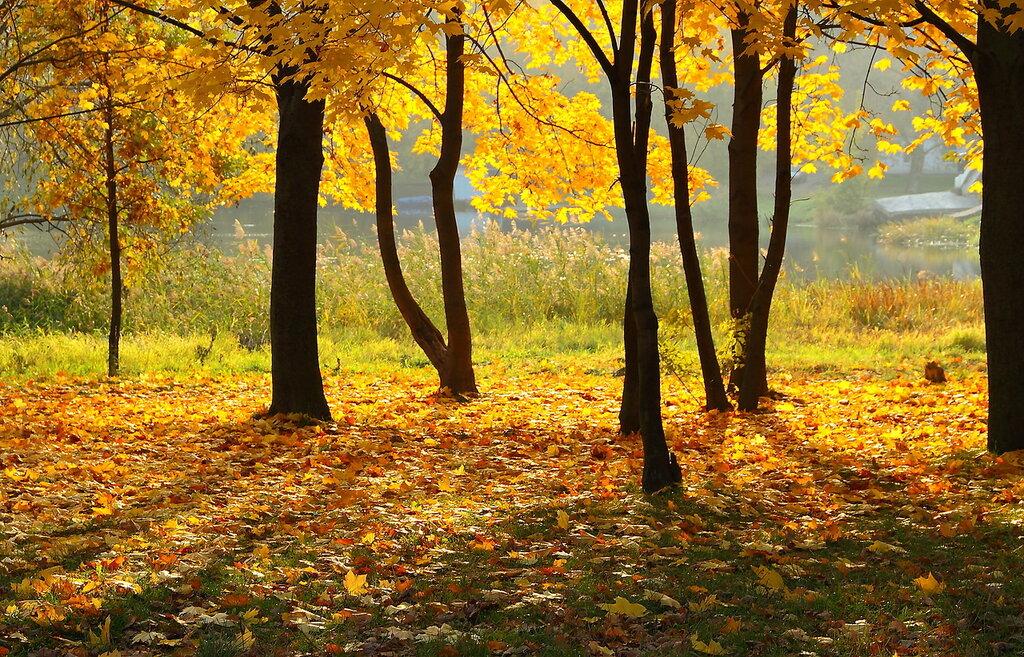 Городская осень