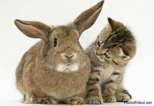 Крол и кот
