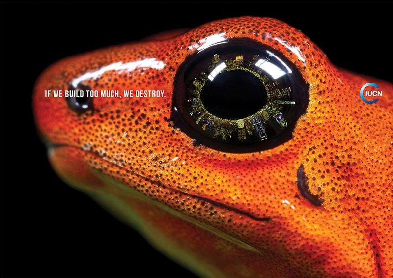 Habitat_Frog_AW