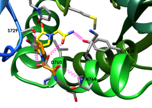ampa receptors, ampa рецепторы, aniracetam, glutamate, medicinal chemistry, racetam, аллостерические модуляторы, анирацетам, глутамат, рацетамы