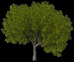 GC_EF_tree_2.png