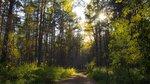 Чем дальше в лес...