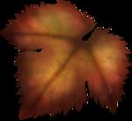 autumnleaf4.png