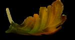 осенние тропинки (39)