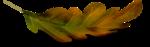 осенние тропинки (38)