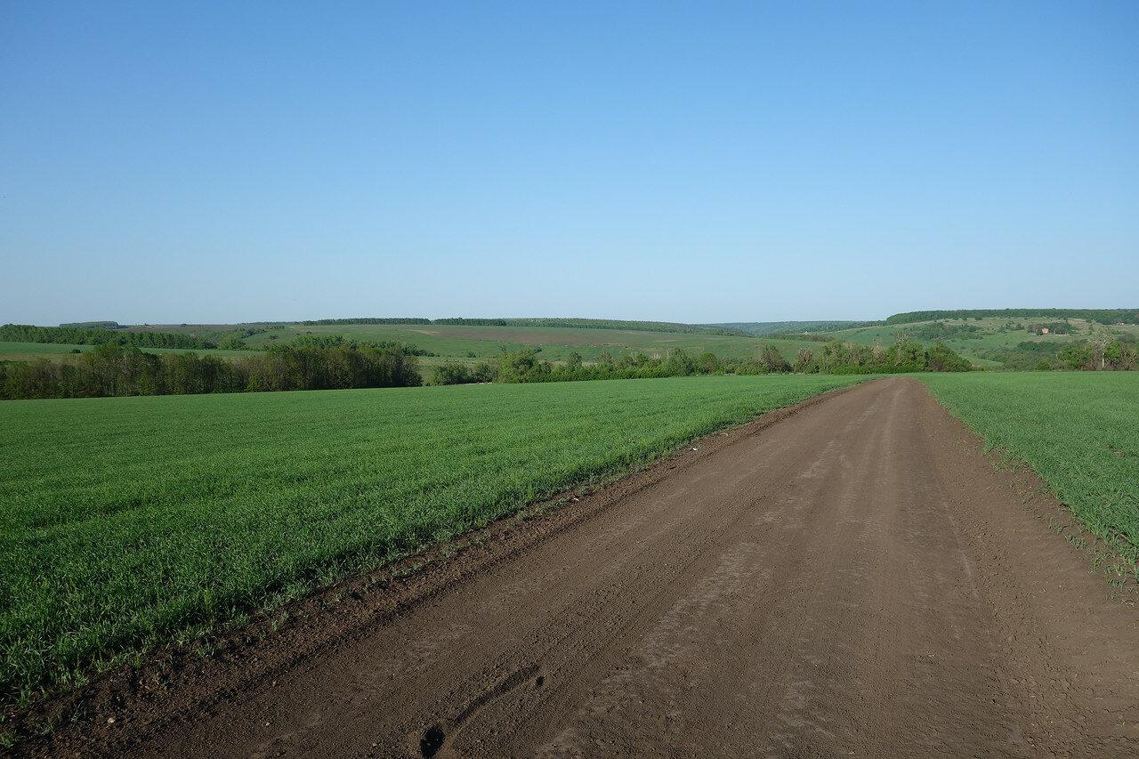 полевая дорога на Большие Плоты