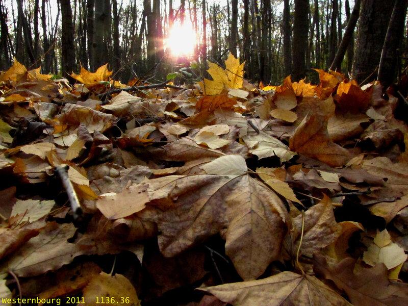 1136.36 Осенний закат. 18 окт. 2011 г.