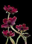flowers_fushia_tubed_by_thafs.png