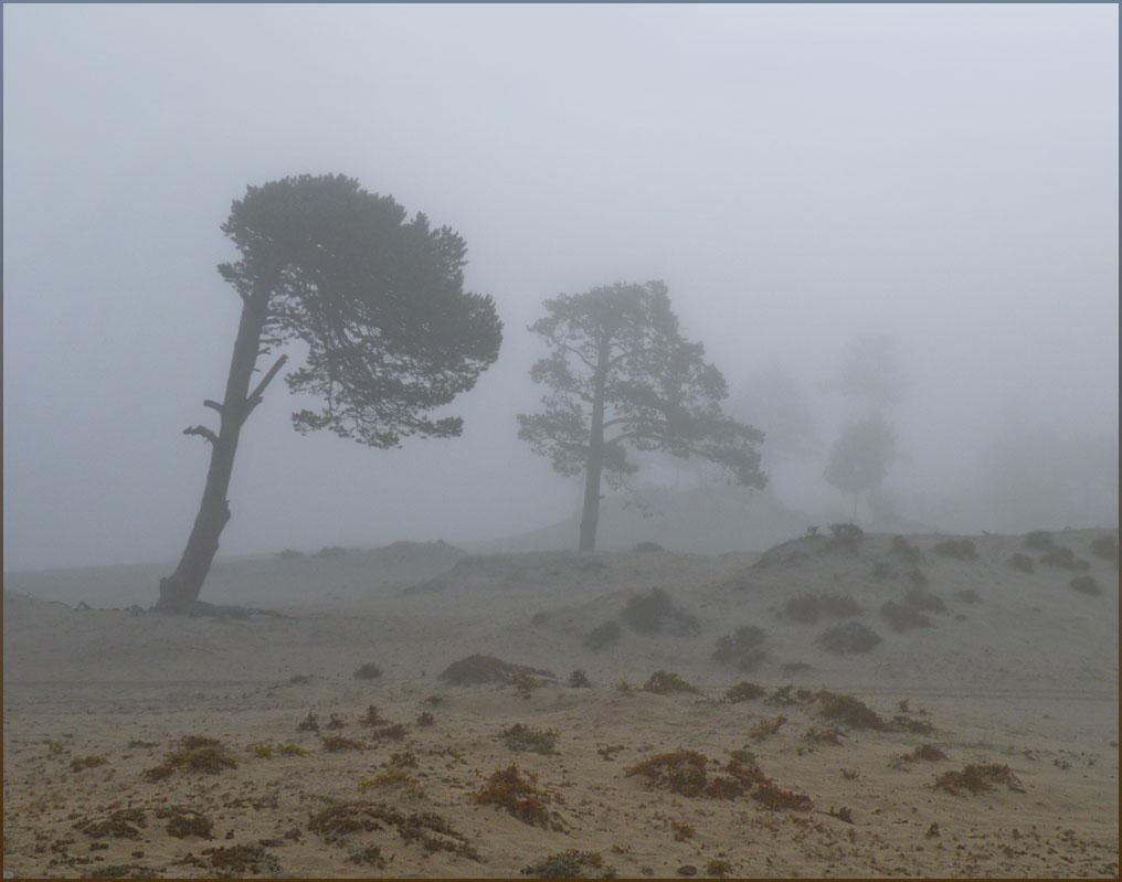 За деревьями - Байкал