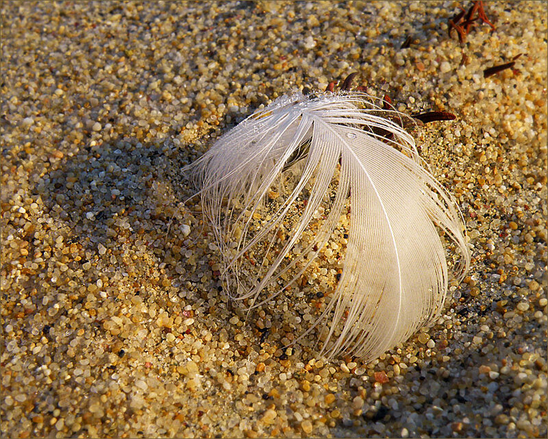 Пёрышко на песке