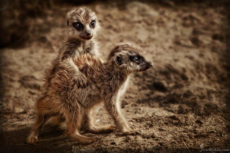 Красивые кадры животных немецкого фотографа Мануэлы Кулпа