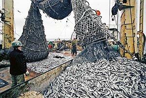 Рыбаки Камчатки нарастили в этом году добычу водных ресурсов