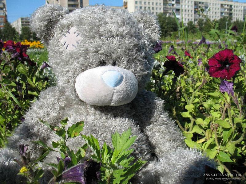 Картинки мишка тедди с цветами 8