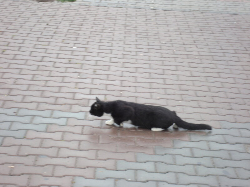 Ростовский котэ на охоте