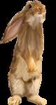 осенние тропинки (88)