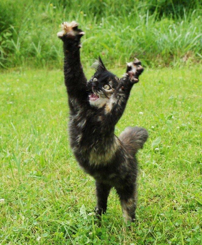 Подборка фото приколов с котами