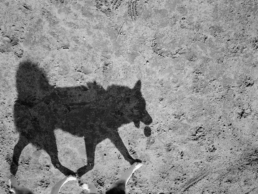 Mondo cane, Thomas Roma280.jpg