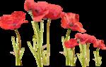 MaryPop_PoppyFields_el (7).PNG