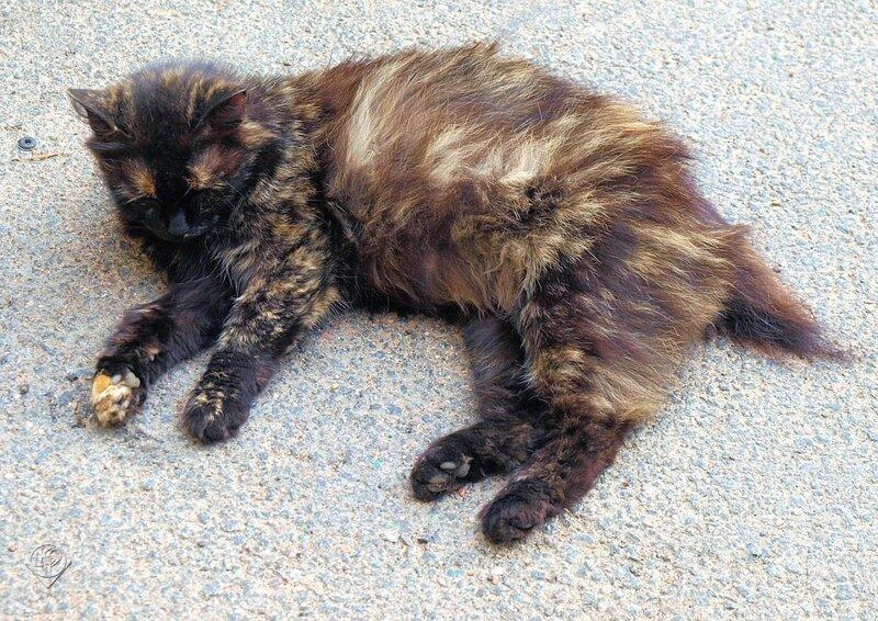 Спит усталая кошка