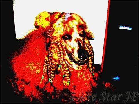 Dog Pigtails