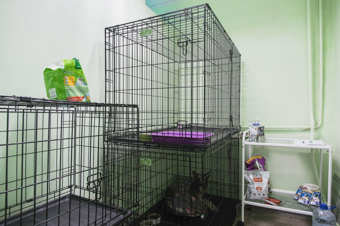 ветеринарная клинка в москве стерилизации кошек