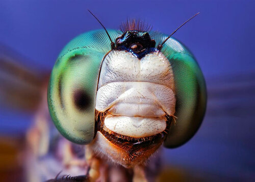 Go2life.net • макро фотографий насекомых