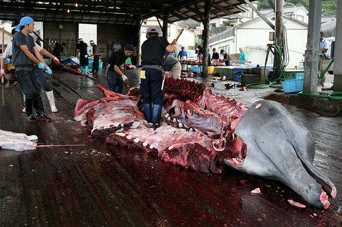 Go2life.net • Китобои и экологи. Фоторепортаж расправы над китами