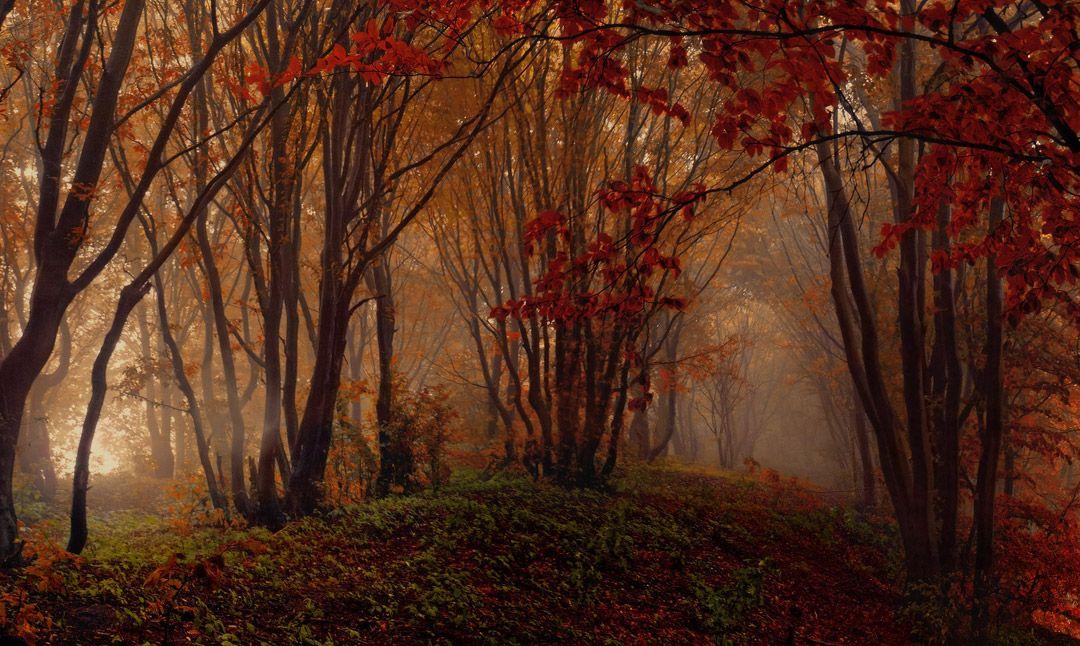 Дыхание природы