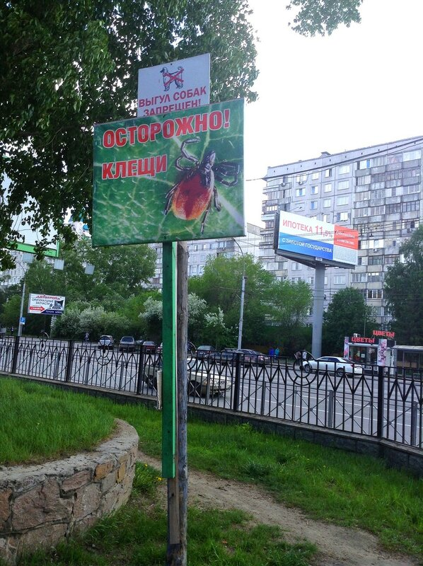 Клубничные поляны и грибные леса в окрестностях Новосибирска. WOW 30 Май 2015 22:59 семнадцатое
