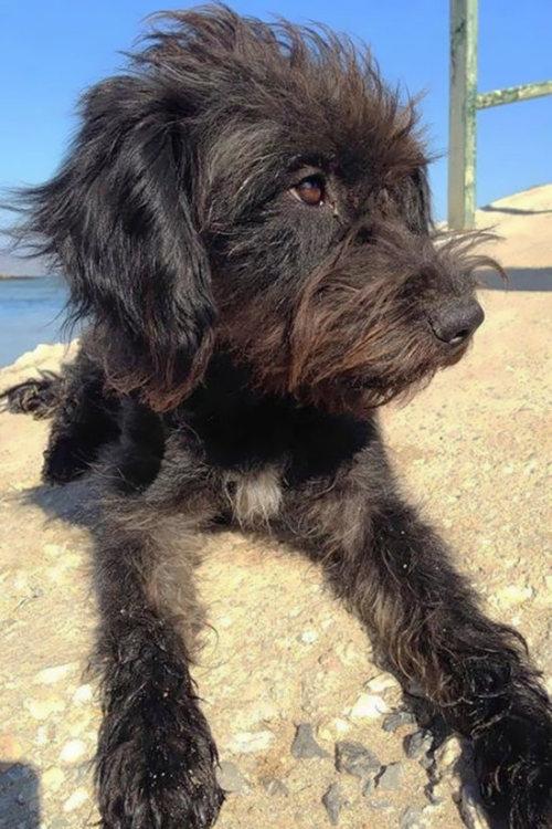 Благодарная девушка приютила спасшую ее бездомную собаку