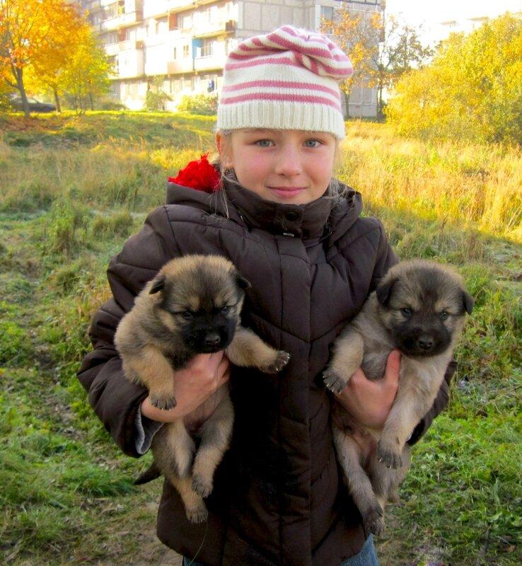 Совсем маленькие щенки,брошенные мамой или с ней что случилось,не знаю