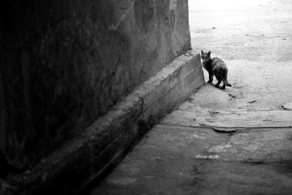 Если черный кот