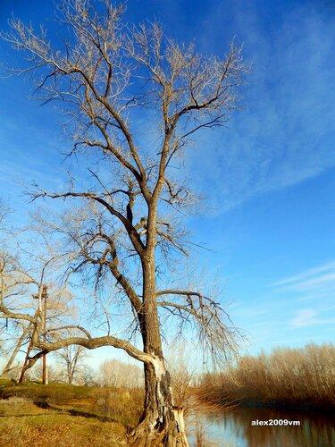 Дерево на берегу ерика