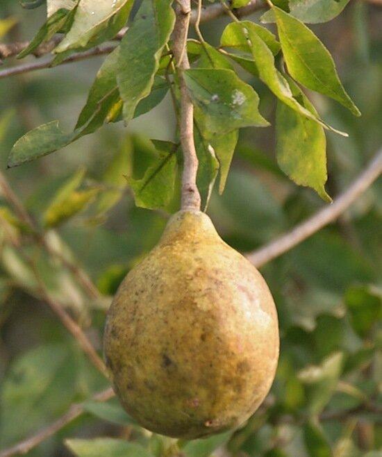 20 экзотических фруктов, о которых вы ничего не знали