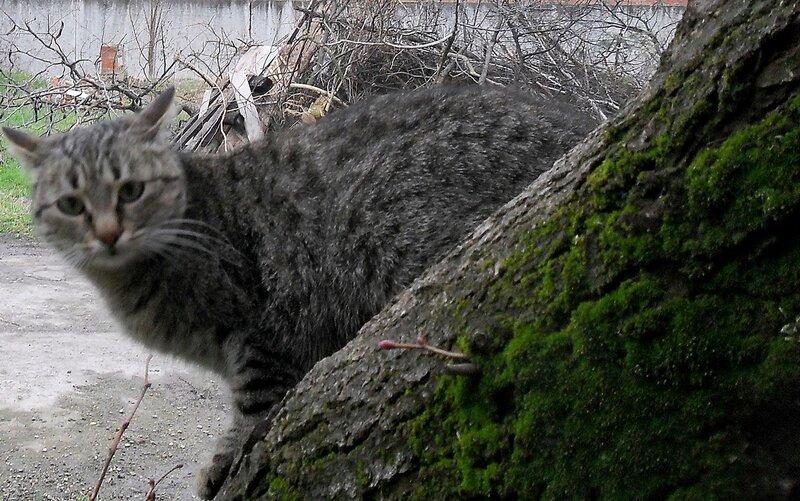 Из кошачьего мира