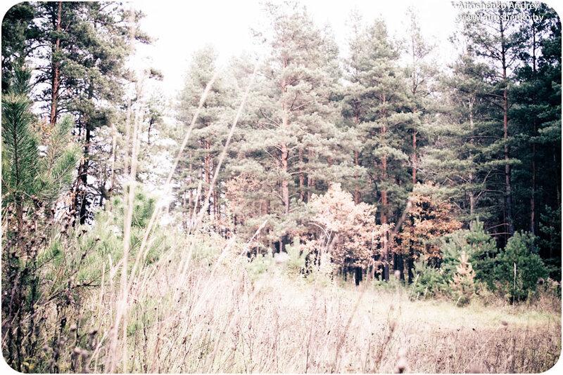 минский лес