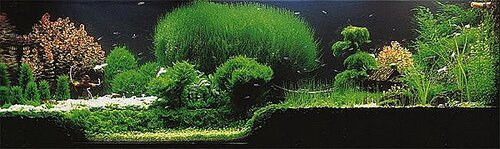 Taiwanese Style в оформлении аквариума.