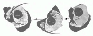 Сикко - «передвижение на коленях» в Айкидо