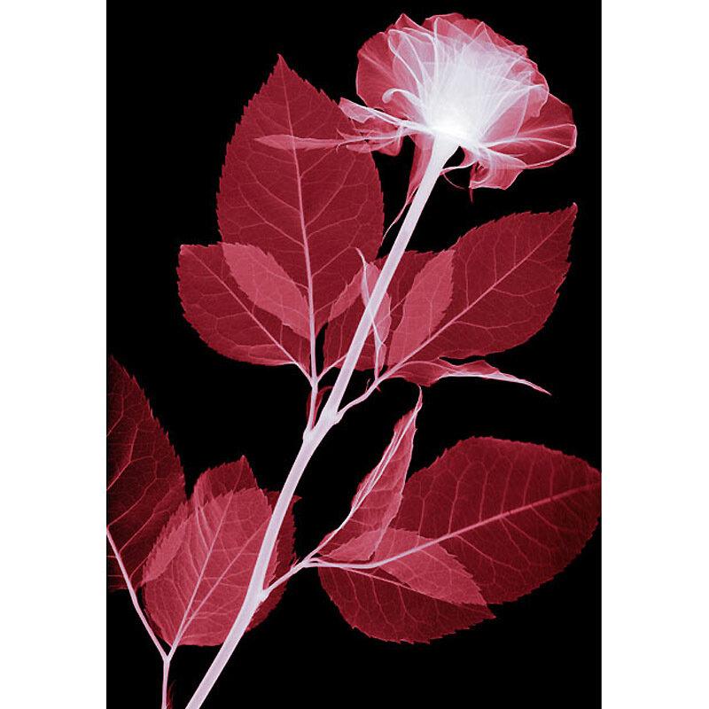 Цветы в рентгеновском изображении.