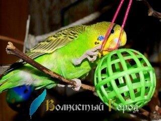 Игрушки для волнистого попугая фото