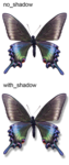 midnight_fantasy_butterfly1.png
