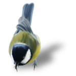 natali_design_dream_bird1-sh.png
